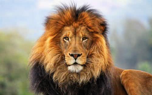 古代西域小國,如何快速致富?撒馬爾罕國:將獅子送往中國